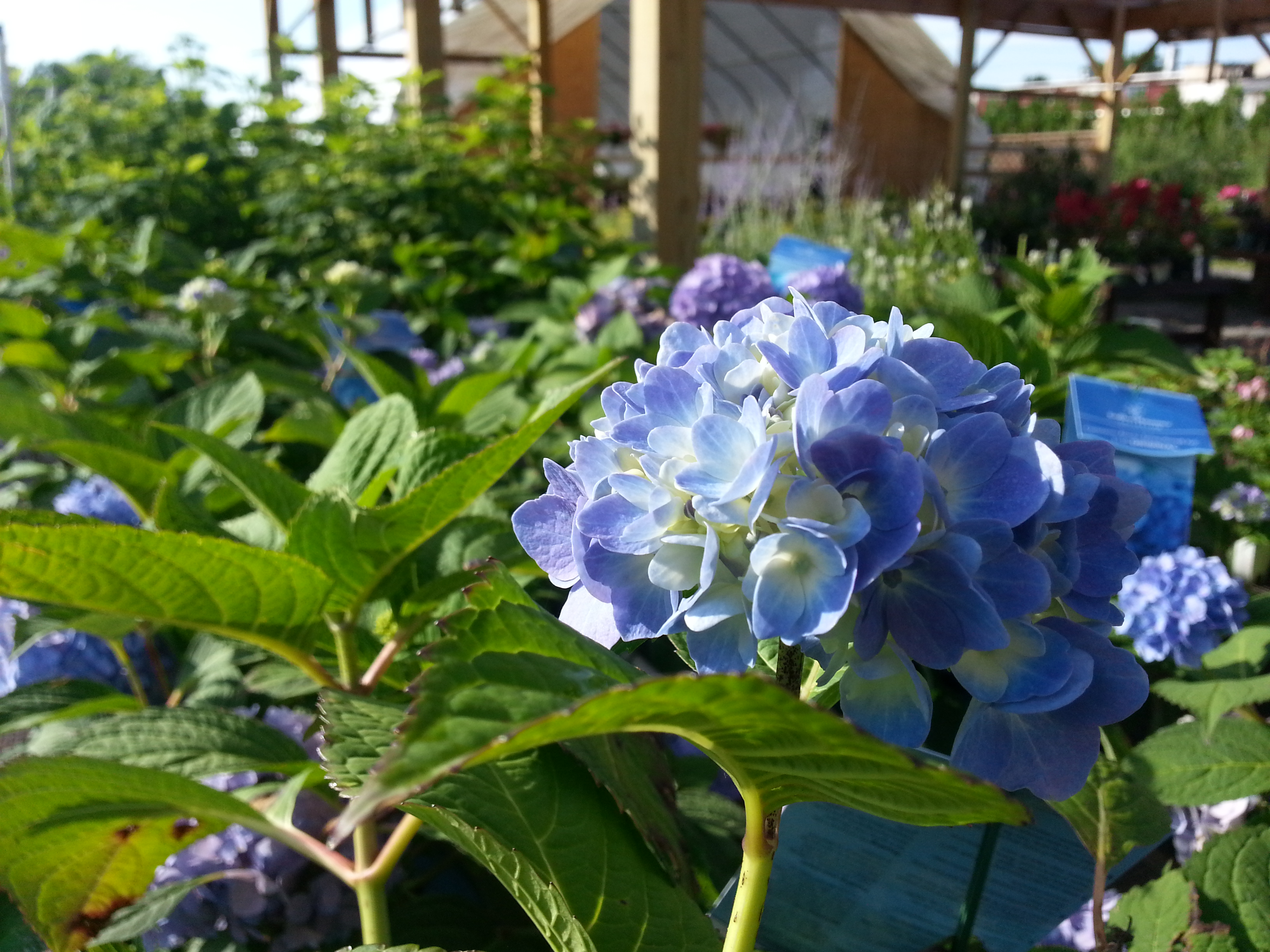 To Prune Or Not To Prune Greenscapes Garden Center