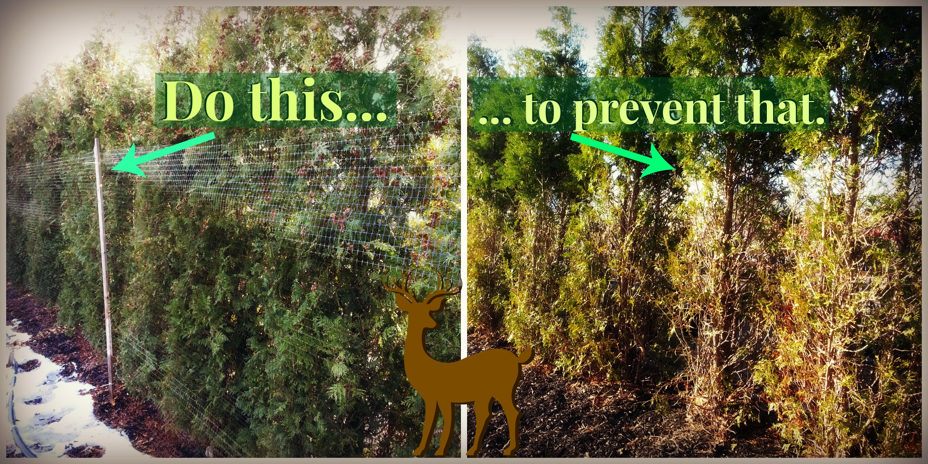 How To Keep Animals Away From Your Garden Part - 44: Animal Repellents Can Also Be Applied To Trees, Shrubs, And Evergreens To  Help Keep These Animals From Making A Feast Out Of Your Investment.
