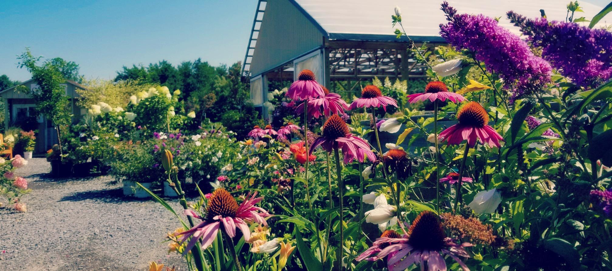 Attrayant Garden Center   GreenScapes Garden Center U0026 Landscape Co.